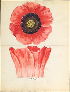 Design drawing of of poppy blossom of floral capital from loggia, Laurelton Hall