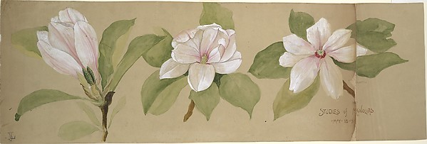 Studies of Magnolias