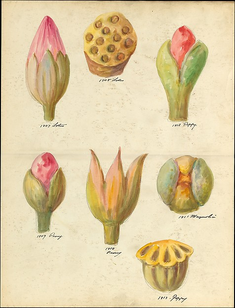 Design drawing of flower buds and seedpods of floral capitals from loggia, Laurelton Hall