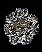 Queen Anne's Lace Hair Ornament