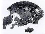 Fragmentary disc