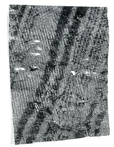 Barkcloth Fragment (Kapa)