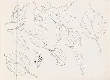 Leaf Studies