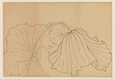 Lotus Studies