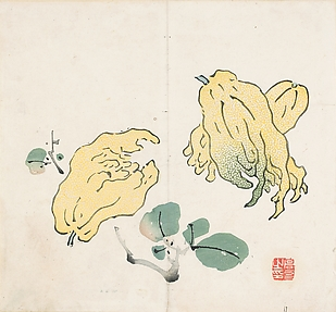 Buddha's Hand Fruits, after Gao You (active first half of the 17th century) Leaf from the Ten Bamboo Studio Collection of Calligraphy and Painting