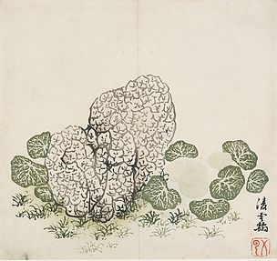 Lichened Stone and Plants, after Ling Yunhan (active second half of the 14th century), Leaf from the Ten Bamboo Studio Collection of Calligraphy and Painting