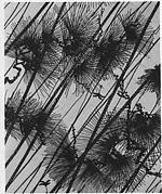Stencil with Pine in Rain