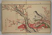 Men's Stomping Dances (Otoko dōka)