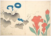 Design of Morningglory and Other Flowers