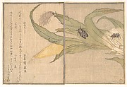 Evening Cicada, Higurashi; Spider, Kumo, from the Picture Book of Crawling Creatures (Ehon mushi erami)