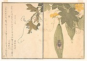Grasshopper (Kirigirisu); Cicada (Semi), from the Picture Book of Crawling Creatures (Ehon mushi erami)