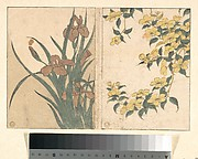Cherry Blossoms and Irises, from the illustrated book Flowers of the Four Seasons