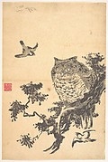 Owl and Two Swallows