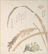 Rice Plant and Butter-Burs