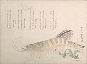 Shrimp and Cuttlefish