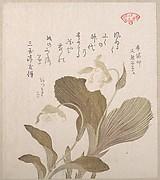 Hotei Flowers