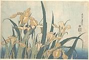 Grasshopper and Iris