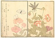Butterfly (Chō); Dragonfly (Kagerō or Tonbo), from the Picture Book of Crawling Creatures (Ehon mushi erami)