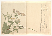 Katydid (Umaoi-mushi); Centipede, (Mukade), from the Picture Book of Crawling Creatures (Ehon mushi erami)