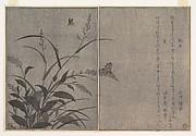 Tree cricket (Matsumushi); Firefly (Hotaru), from the Picture Book of Crawling Creatures (Ehon mushi erami)