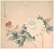 Flower Study