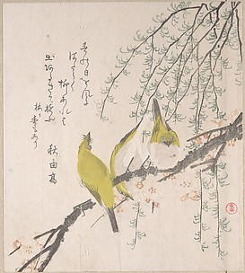 Japanese White-eyes with Plum Tree and Willow, from Spring Rain Surimono Album (Harusame surimono-jō, vol. 3)
