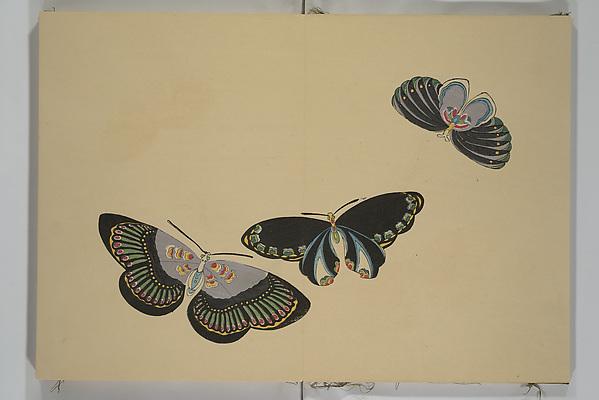 『蝶千種』<br/>A Thousand Butterflies (Chō senshu)