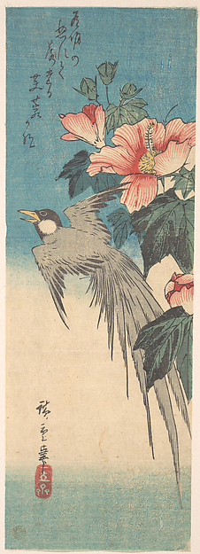 Hibiscus Mutabilis and Long-Tailed Bird