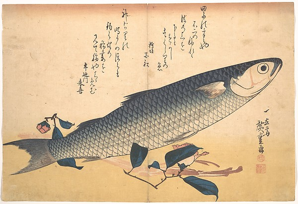 魚づくし ぼらにうど<br/>Bora Fish with Camellia, from the series Uozukushi (Every Variety of Fish)