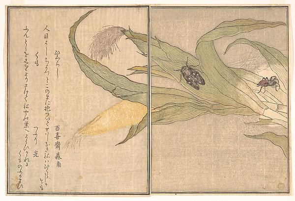 Evening Cicada, Higurashi; Spider, Kumo, from the Picture Book of Crawling Creatures (Ehon mushi erami)