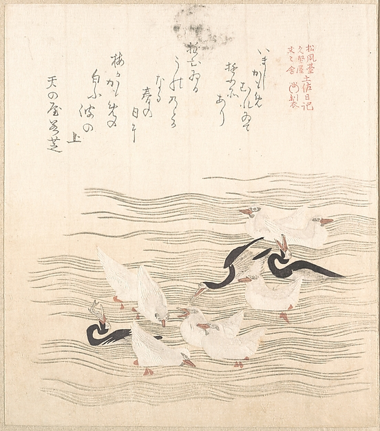 Sea-Gulls Playing on the Water