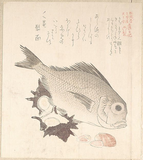 Tai Fish and Top-Shells