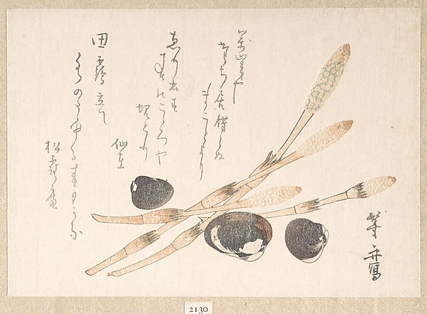 Tsukushi Plant and Shijimi Shells