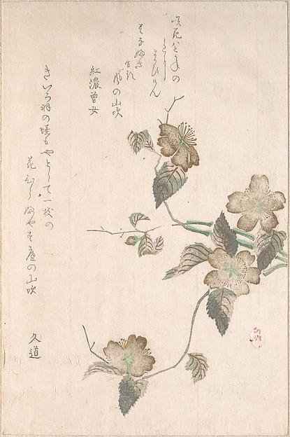 Yamabuki Flowers (kerria japonica)