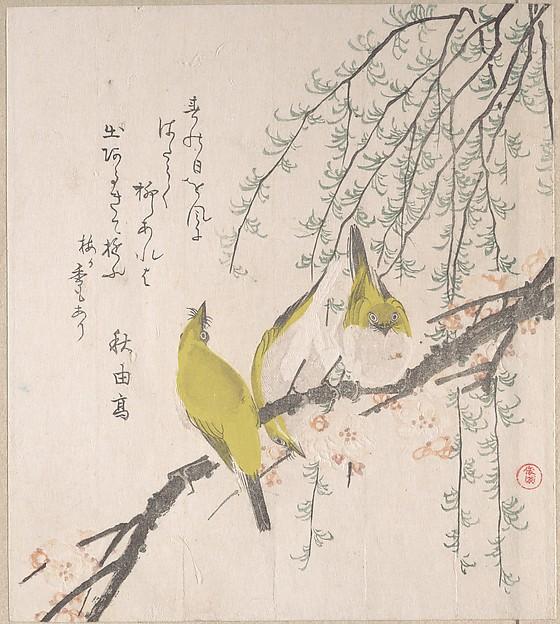 Japanese White-eyes with Plum Tree and Willow, from Spring Rain Surimono Album (Harusame surimono-jō, vol. 3)