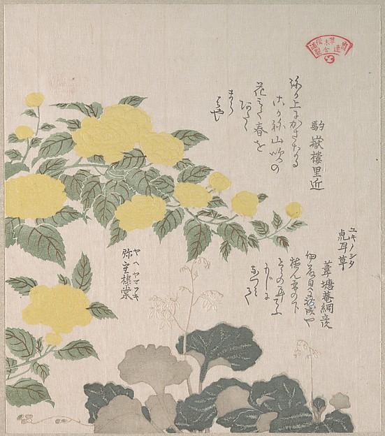 Corchorus (or Yellow Rose) and Creeping Saxifrage