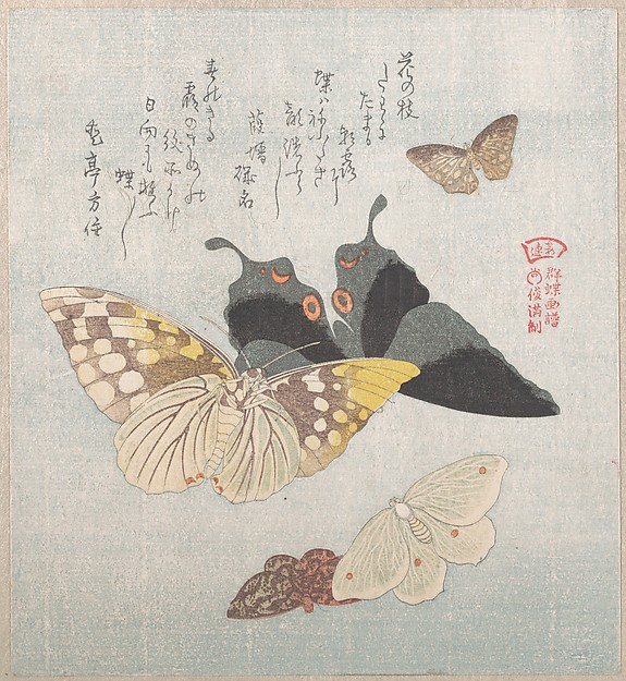Various moths and butterflies