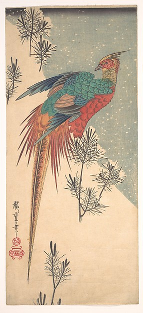 Golden Pheasant and Pine Shoots in Snow