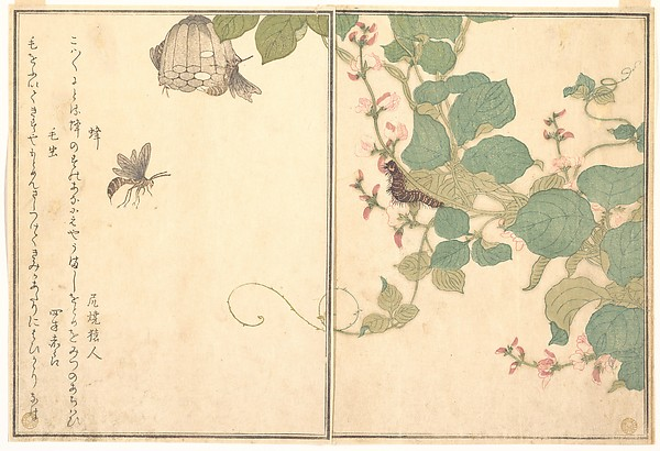 『画本虫撰』  「蜂」「毛虫」