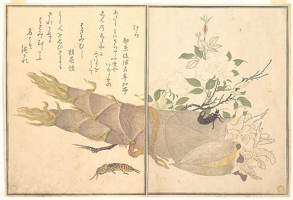 『画本虫撰』   「けら」「はさみむし」<br/>Mole Cricket (Kera); Earwig, (Hasami-mushi), from the Picture Book of Crawling Creatures (Ehon mushi erami)