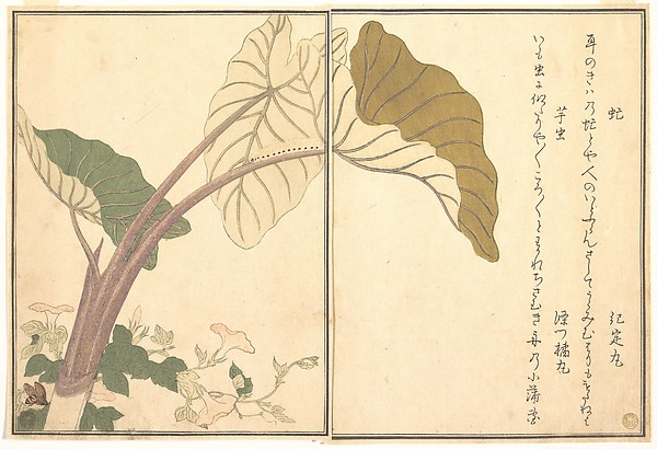 『画本虫撰』  「虻」「芋虫」<br/>Horsefly (abu); Green Caterpillar, imomushi, from the Picture Book of Crawling Creatures (Ehon mushi erami)