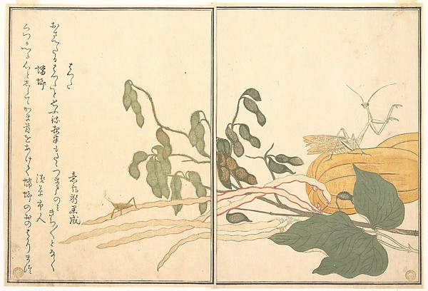 画本虫撰 バッタと蟷螂<br/>Cone-headed Grasshopper or Locust, (batta); Praying Mantis (Tōrō or Kamakiri), from the Picture Book of Crawling Creatures (Ehon mushi erami)