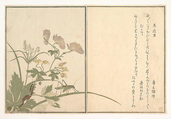 『画本虫撰』   「馬追虫」「むかて」<br/>Katydid (Umaoi-mushi); Centipede, (Mukade), from the Picture Book of Crawling Creatures (Ehon mushi erami)