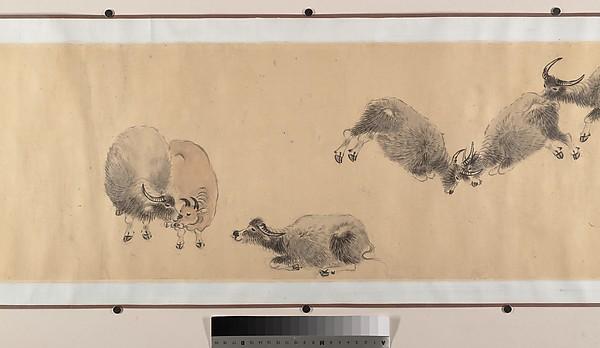 Water Buffaloes