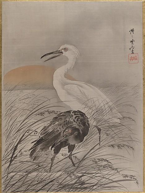 Cranes in Marsh