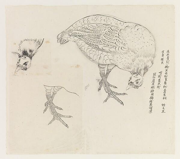 Studies of a Bird
