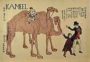 Camels with Dutch Handlers