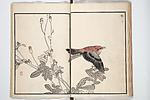 Bairei Picture Album of One Hundred Birds (Bairei hyakuchō gafu)