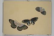 A Thousand Butterflies (Chō senshu)