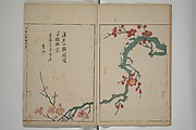 A Collection of Lively Sketches [Of Flowers and Insects] of the Ming dynasty (Minchō shiken)